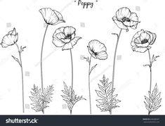 Poppy illustration on white background. Poppy illustration on white background. The post Poppy illustration on white background. appeared first on Diy Flowers. Flower Art Drawing, Flower Sketches, Flower Drawings, Drawing Art, California Poppy Tattoo, California Poppy Drawing, Poppies Tattoo, Poppies Art, Illustration Blume