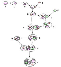 Alga - Wikipedia, la enciclopedia libre