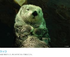 Sea Otters lol