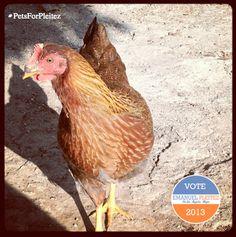 Vote Emanuel for Mayor of Los Angeles 2013 www.pleitezforla.com/petsforpleitez