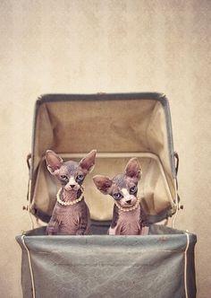 Regal kittens.