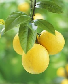 lemons- reminds me of vacations in Arizona-picking lemons off the tree in our yard with my daughter