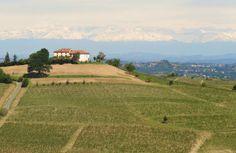Wijngaarden in de buurt van Incisa Scapaccino