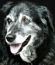 Beautiful Old Dog - Please don't dump me just because I'm getting old.  You're my family, and I need and love you.