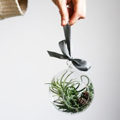 Air plant ornament