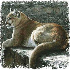 Spirit of Cougar