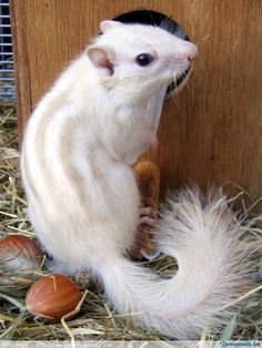 More Than 44 Rare Photos Of Albino Animals Like None You'll See In fotos raras de animales albinos como ninguno que verás en seltene fotos von albino-tieren wie keine, die sie sehen werden foto rare di animali albini come nessuno che vedrai Amazing Animals, Unusual Animals, Animals Beautiful, Majestic Animals, Beautiful Things, Animals And Pets, Cute Baby Animals, Funny Animals, Small Animals