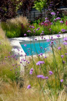 Verbena Bonariensis and Stipa Stipa, Prairie Garden, Boarders, Outdoor Recreation, Outdoor Ideas, Garden Inspiration, Beautiful Gardens, Garden Plants, Brighton