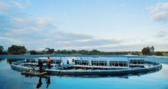 Start-up Infratech's floating solar rafts hold promise for Australia's rural communities