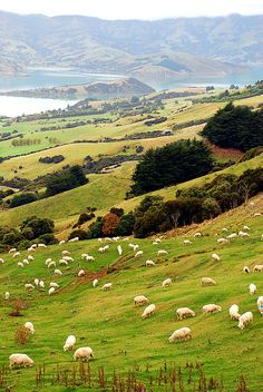 Akaroa Harbour - New Zealand (von geoftheref)