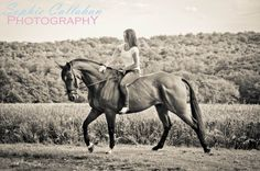 Equine Photography, Hertfordshire - Sophie Callahan Photography