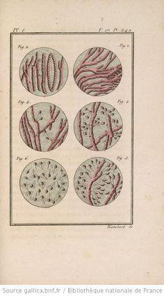 [Illustrations de Histoire naturelle générale et particulière] / Blanchard, grav. ; C.S. Sonnini, Leclerc de Buffon, aut. du texte - 1