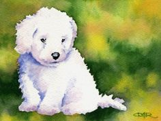 BICHON FRISE Puppy Original Watercolor Painting by by k9artgallery, $145.00