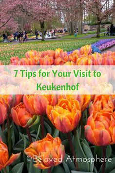 7 Tips for Your Visit to Keukenhof Garden in Holland. Netherlands.