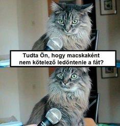 New meme compilation (cat memes,dog memes,pets memes,animal memes) Funny Animal Memes, Dog Memes, Cute Funny Animals, Funny Cute, Cute Cats, Funny Memes, Animal Memes Clean, Funniest Animals, Cat Fun