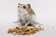 What You Feed To Your Hamster Is Very Important. Here I reveal all the secrets of what you should feed your hamster and how to keep your hamster happy and healthy. Diy Hamster Food, Dwarf Hamster Food, Hamster Treats, Pet Treats, Hamster Stuff, Dwarf Hamsters, Pet Stuff, Hamsters As Pets, Classroom Pets