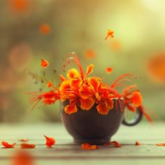 Ashraful Arefin Happy as the sun (Dhaka Bangladesh)