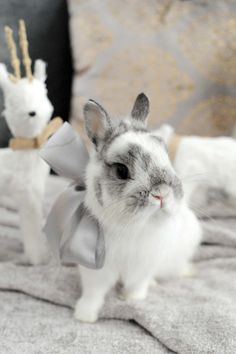 netherland dwarf rabbit, bunny, corduroy the bunny, broken chinchilla - Cute Baby Bunnies, Funny Bunnies, Cute Baby Animals, Cute Babies, Funny Animals, Funny Pets, Animals Dog, Fluffy Bunny, Netherland Dwarf Bunny