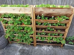 Great way to have lots of strawberries in a limited space  By Joshua M. Levine  -   Amazon.com: Gronomics VG3245 Vertical Garden Planter, 32-Inch by 45-Inch by 9-Inch: Garden & Outdoor
