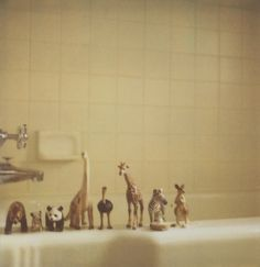 sara + h : The line-up    Astrid is sick. The bathtub is her refuge. The animals have seen a lot of action lately.
