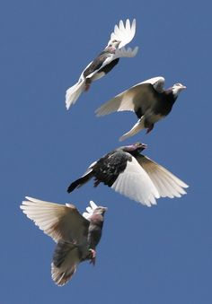 bird fly - Cerca con Google