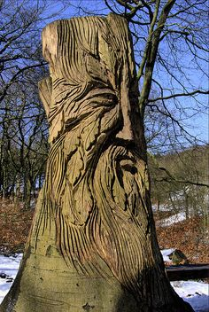 Tree Ent carving in Tandle Hills park Royton.  From latentmediocrity photostream