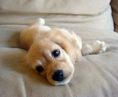 Look this little one http://newgift.tk/dogfood