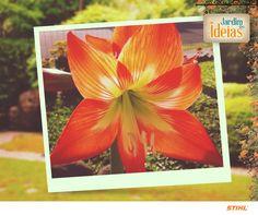 Bela flor enviada pela Adriana Teixeira!