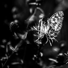 Loving this pic Butterfly by honza35 via @mipic_app