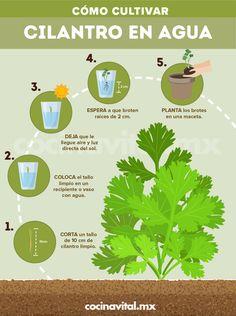 Home Vegetable Garden, Fruit Garden, Garden Plants, Love Garden, Dream Garden, Starting A Garden, Compost, Organic Gardening, Beautiful Gardens