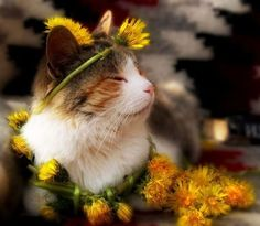 Lil Garden Princess Kitty!