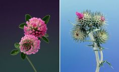 photographer Erwan Frontin's wildflowers