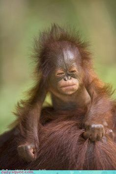 @Kristina Kilmer Kilmer Morrell look I found your baby picture!  SO CUTE!