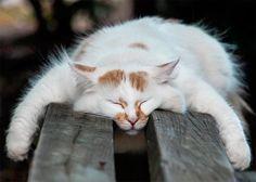 Кошаки так устают, что спят практически все время