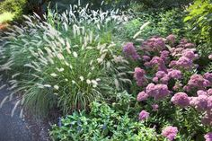Gardening: Ornamental grass to the rescue - Richmond Times ...