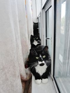 Three Cats in a Window by Naomi Lir Pretty Cats, Beautiful Cats, Baby Kittens, Cats And Kittens, Curiosity Killed The Cat, Three Cats, Kinds Of Cats, Curious Cat, Domestic Cat