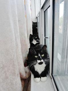 Three Cats in a Window by Naomi Lir, via Flickr