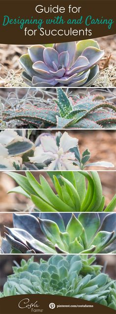 Pick out the perfect succulents for your space -- and get tips to grow and design with them! The succulent growers and gardening experts at Costa Farms share their advice.