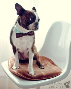 love this photo!     by pig dog designs   (via blah, blah, blahg)