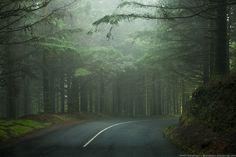 On the road, Ribeiro Frio, Madeira