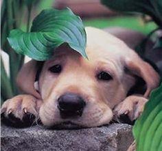 """Animales seres vivos : """"Las mentes más profundas de todos los tiempos han..."""