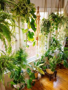 The best flower pot design ideas for decoration inside the house 06 Room With Plants, House Plants Decor, Plant Rooms, Easy House Plants, Hanging Plants, Indoor Plants, Indoor Gardening, Organic Gardening, Indoor Herbs