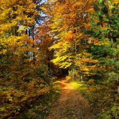 Jesień w Jurze
