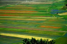 Casteluccio flower fields