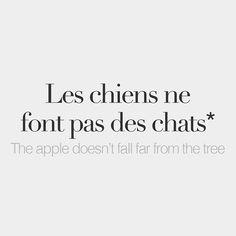Literal meaning: Dogs dont make cats /le ʃjɛ nə fɔ pa de ʃa/ #frenchlanguage