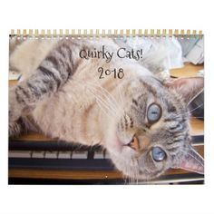 Quirky Cats! 2018 Cat Calendar - cat cats kitten kitty pet love pussy