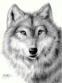 Hier zie je de kop van een wolf en ook een beetje waar se schaduwen zitten en de donkere haartjes.