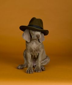 By William Wegman. either al capone or hoody partner  u pic