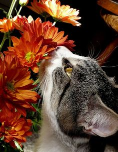 Pretty Cat bouquet