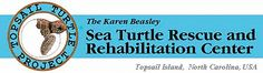 Sea Turtle Rescue and Rehabilitation Center Topsail Island NC....